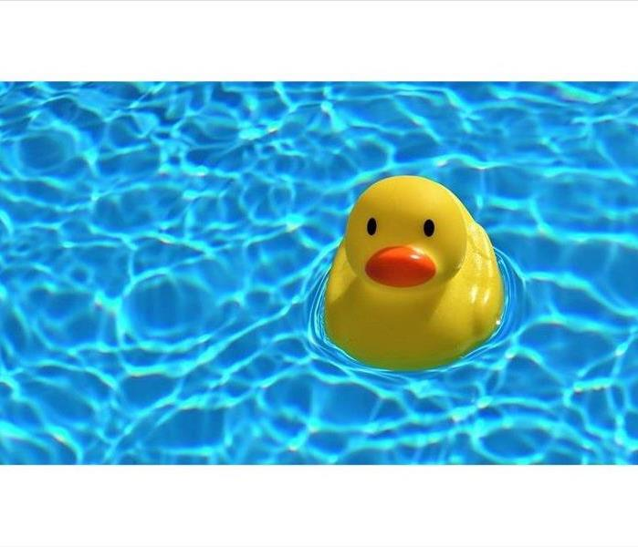 Duck in swimming pool