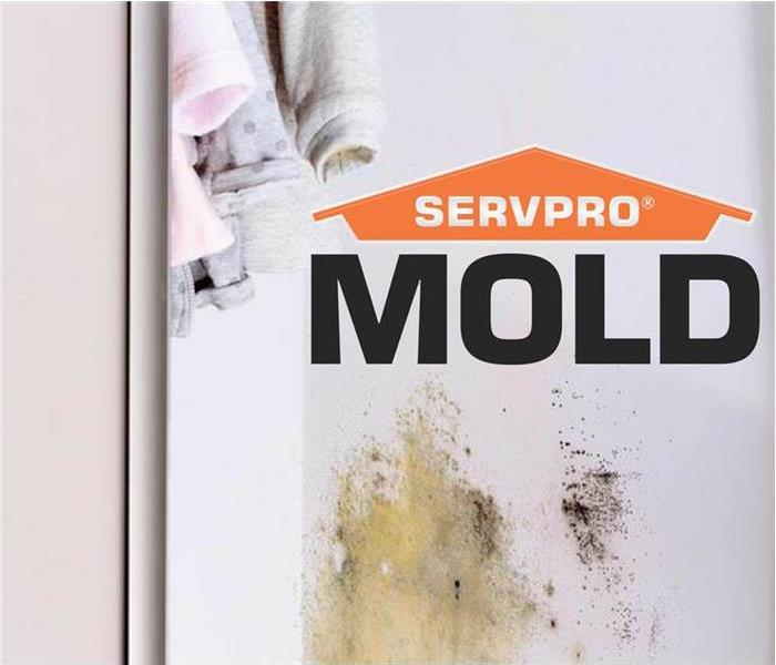 Mold Remediation Mold Can Spread Through A Home In As Little As 48 hours